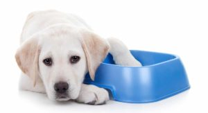 How Many Times a Day Should a Dog Eat a Meal?