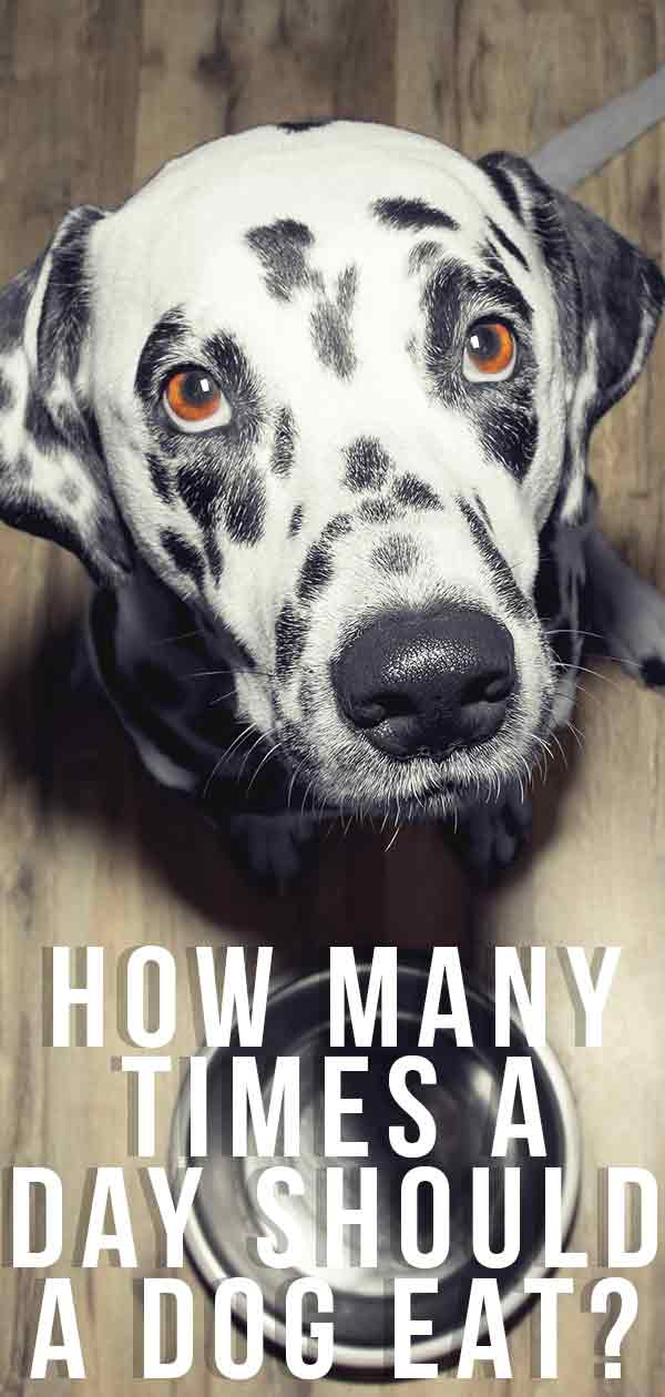 how many times a day should a dog eat