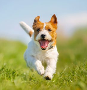 How Positive Dog Training Works