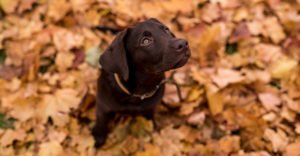How To Teach A Dog To Sit – Basic Training For Your Pooch