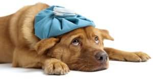 Hydrogen Peroxide For Dogs – Vomiting, Ears, Wounds, Other Issues