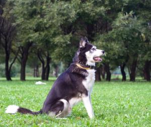 Latency In Dog Training