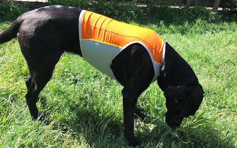 Ruffwear Cooling Vest