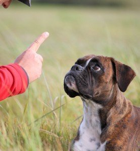 No Reward Markers In Dog Training