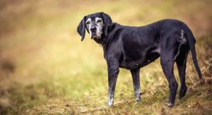 What Dog Breed Lives The Longest And Why Don't Dogs Live Longer?
