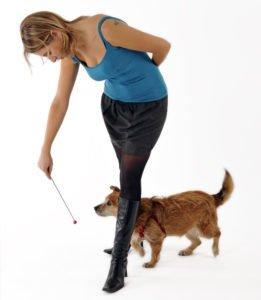 target dog training