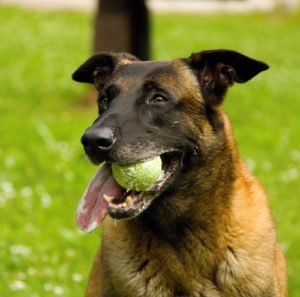 Why Should You Teach Your Dog To Fetch