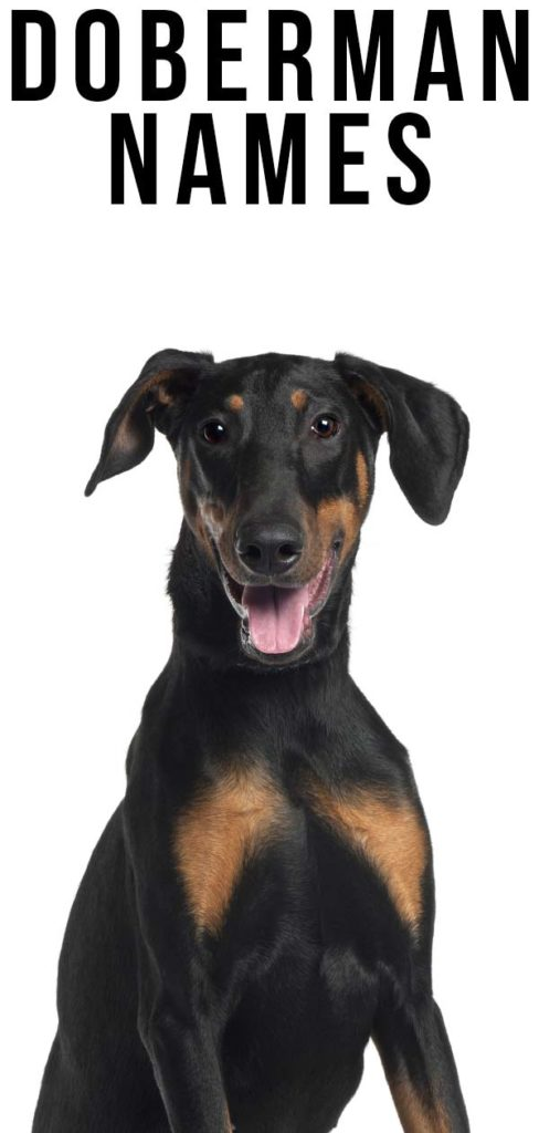 Doberman names