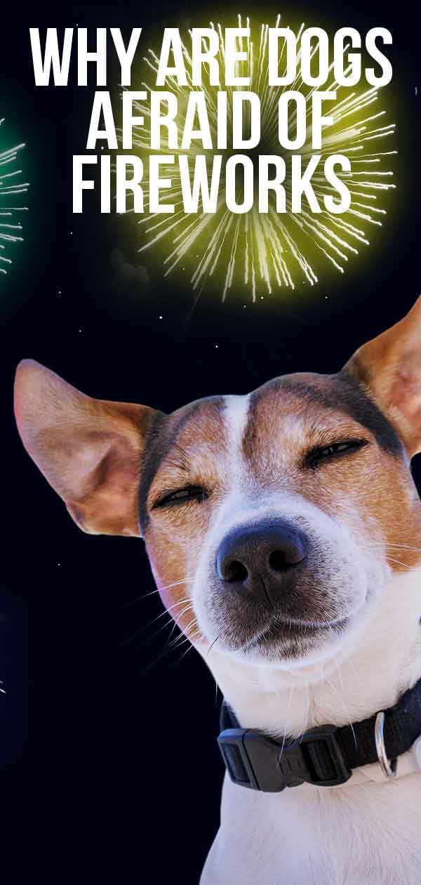 why are dogs afraid of fireworks