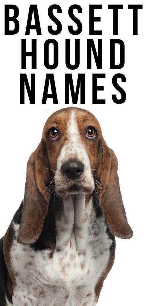 basset hound names