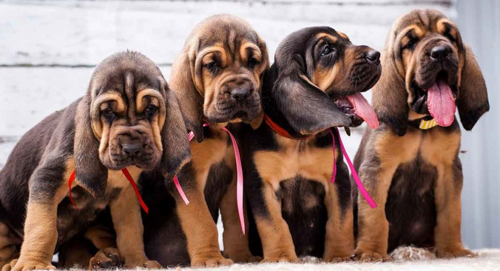 Bloodhound Names