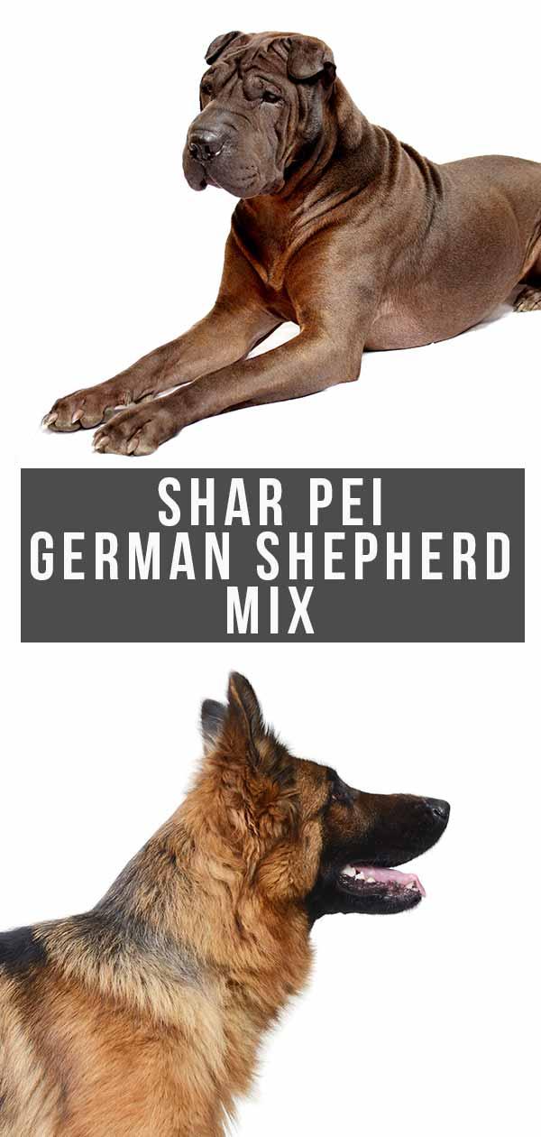 shar pei german shepherd mix