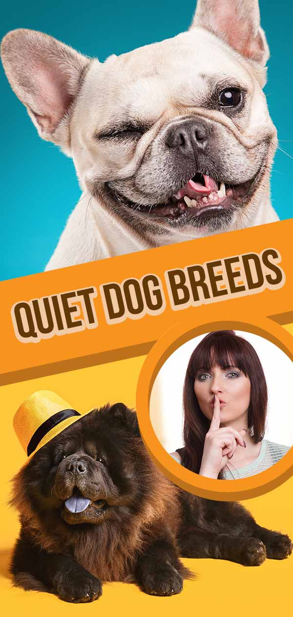 quiet dog breeds