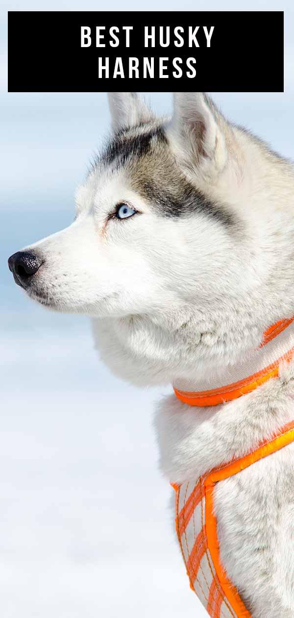 best husky harness