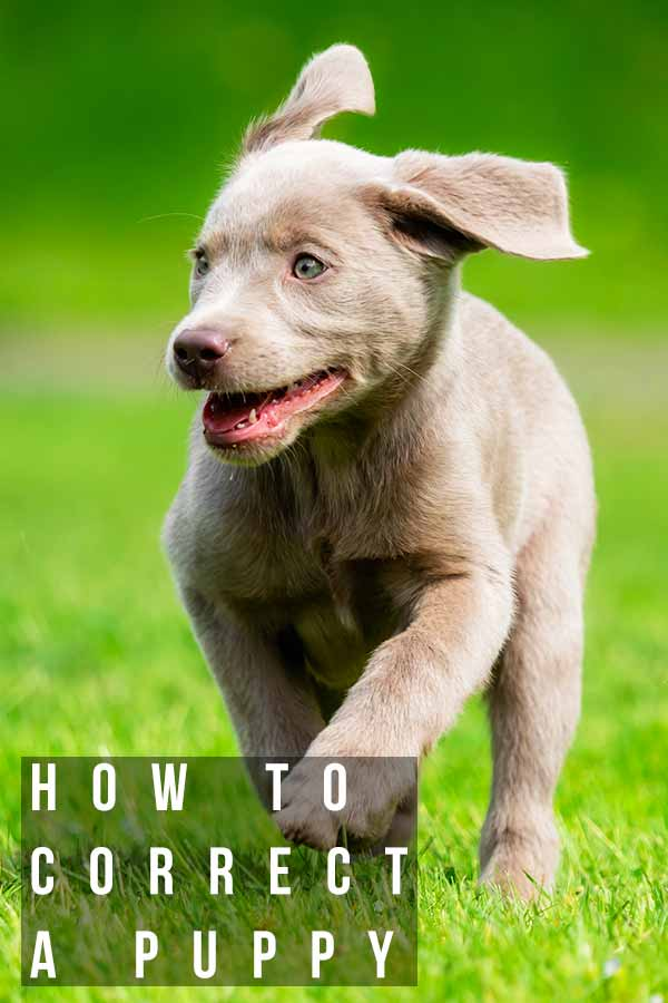 How To Correct A Puppy