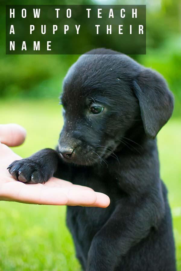 How To Teach A Puppy Their Name