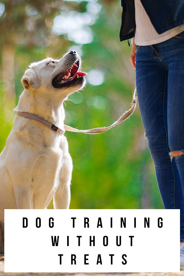 dog-training-without-treats