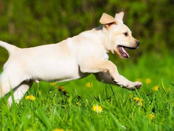 when can i walk my puppy off leash