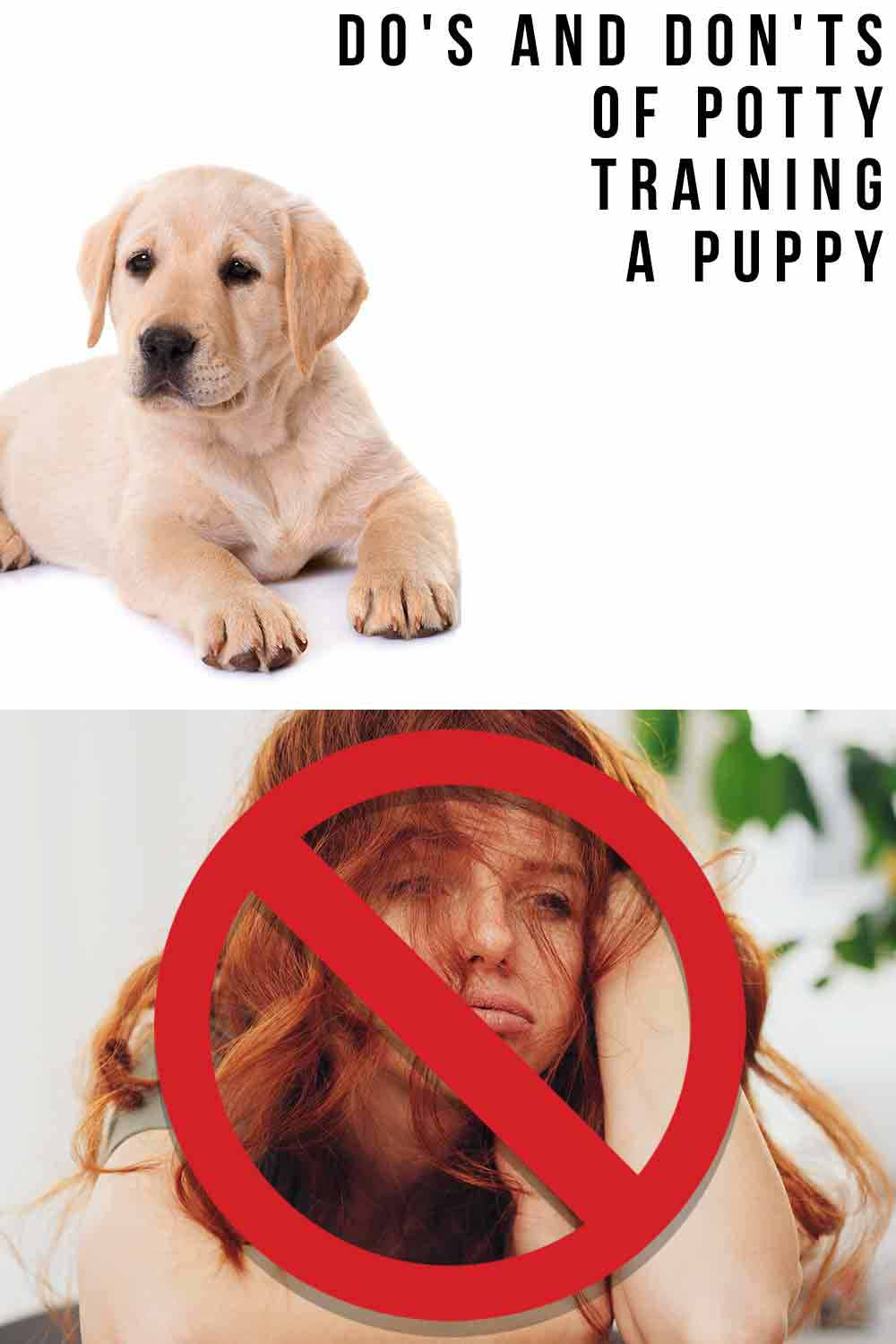 do's and don'ts of puppy parenting