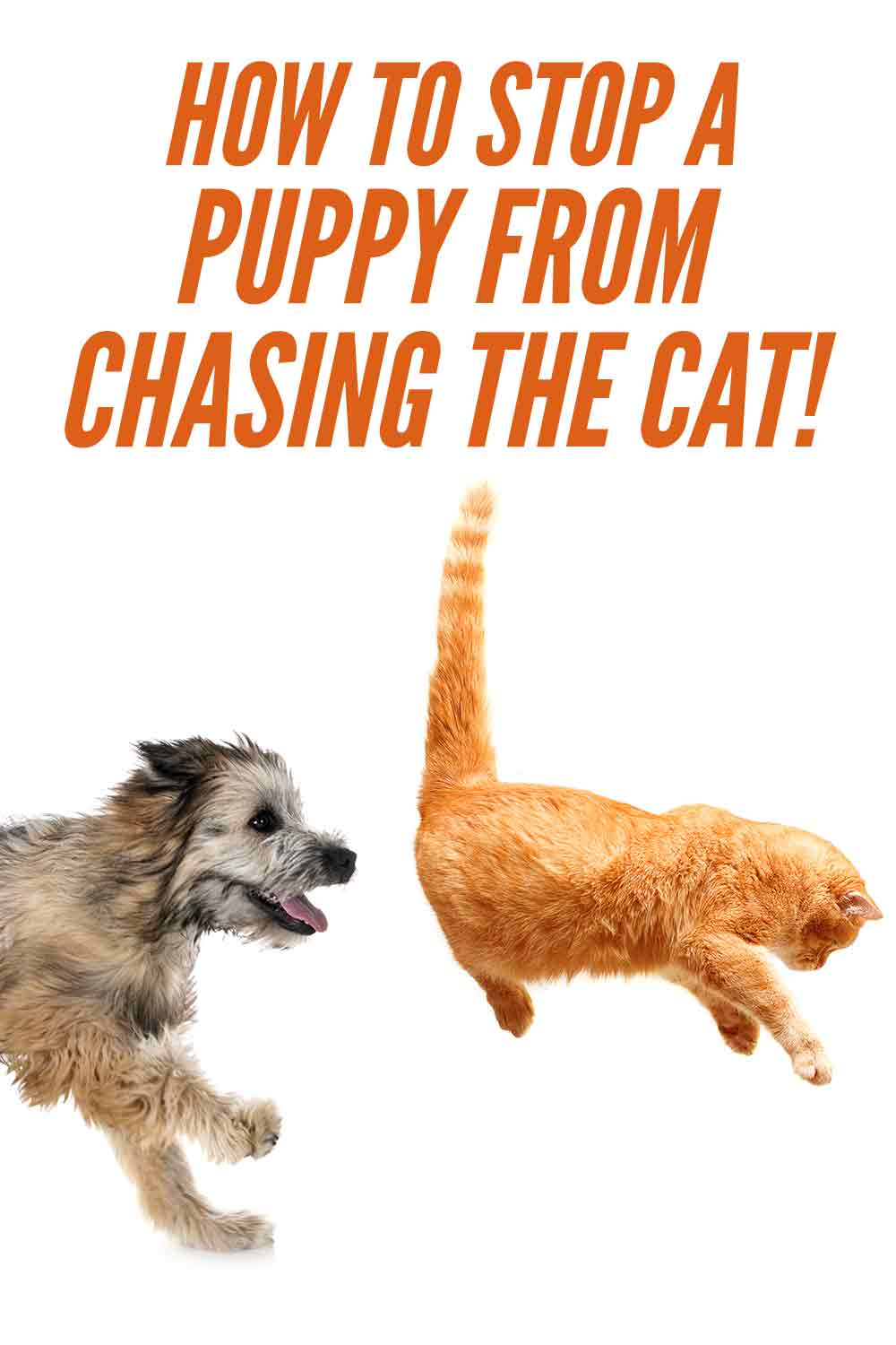 how to stop a puppy from chasing the cat