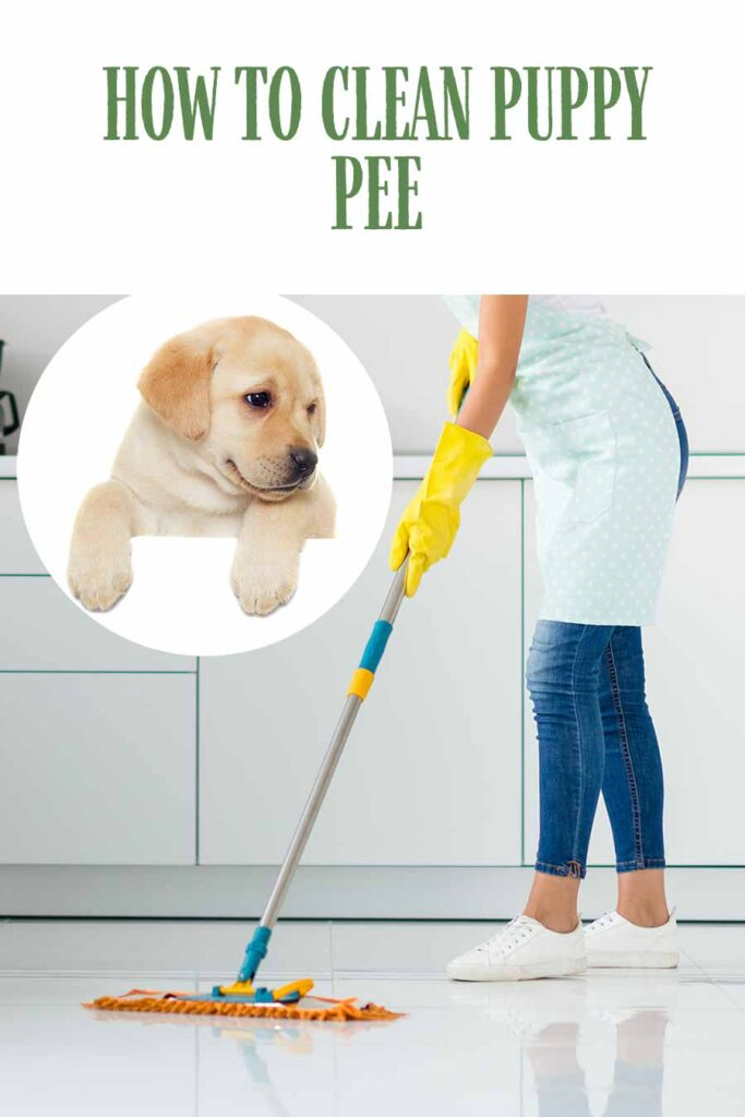 how to clean puppy pee on tile