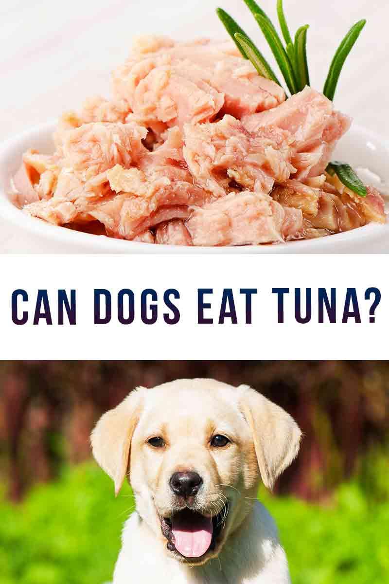 Can Dogs Eat Tuna?