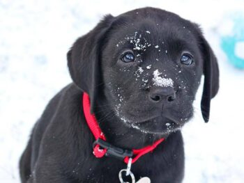 winter puppy potty training