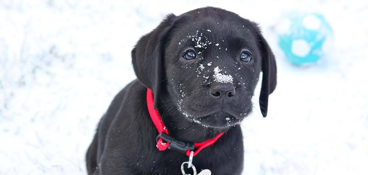 winter puppy potty training