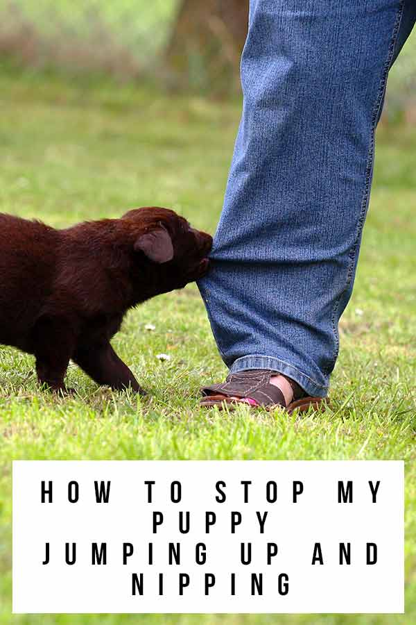 How To Stop My Puppy Jumping Up And Nipping