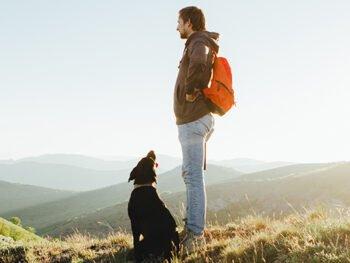 labrador on a hill
