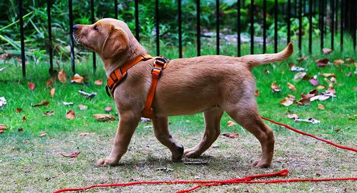 long leash dog training