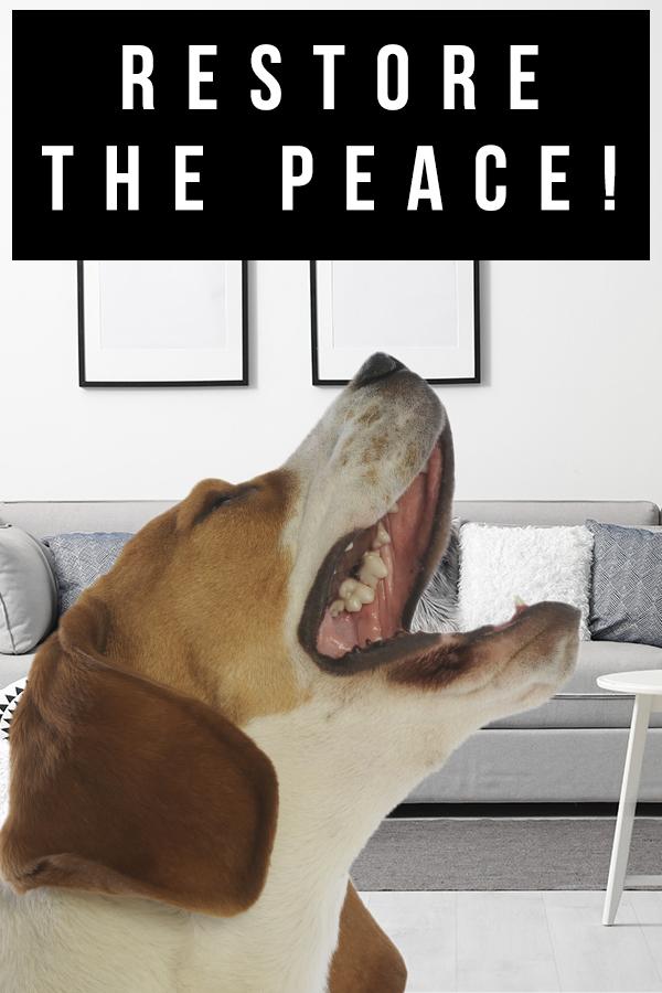beagle barking