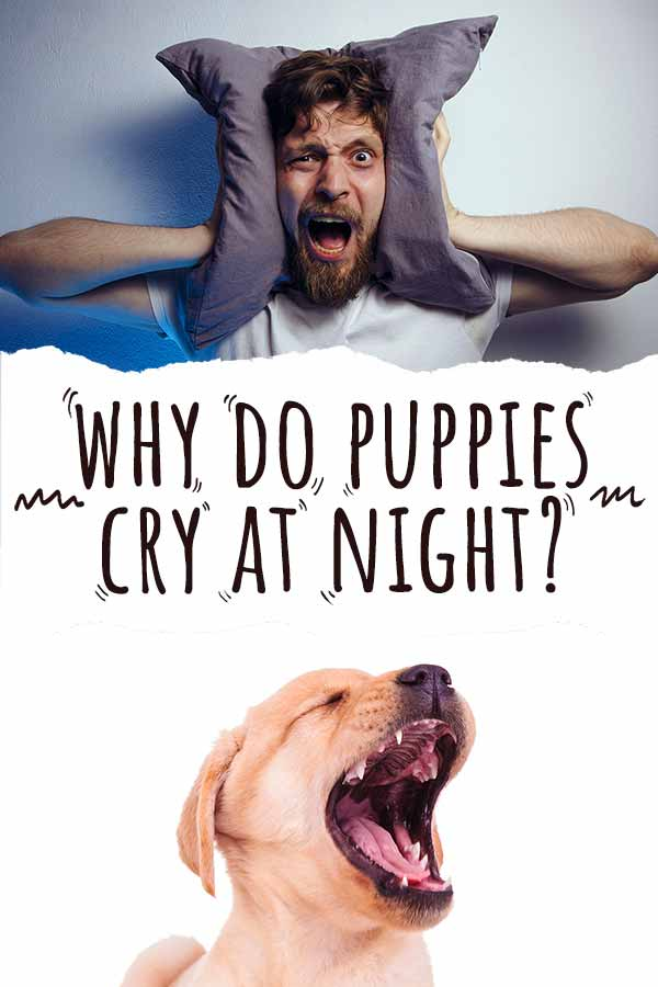 why do puppies cry at night