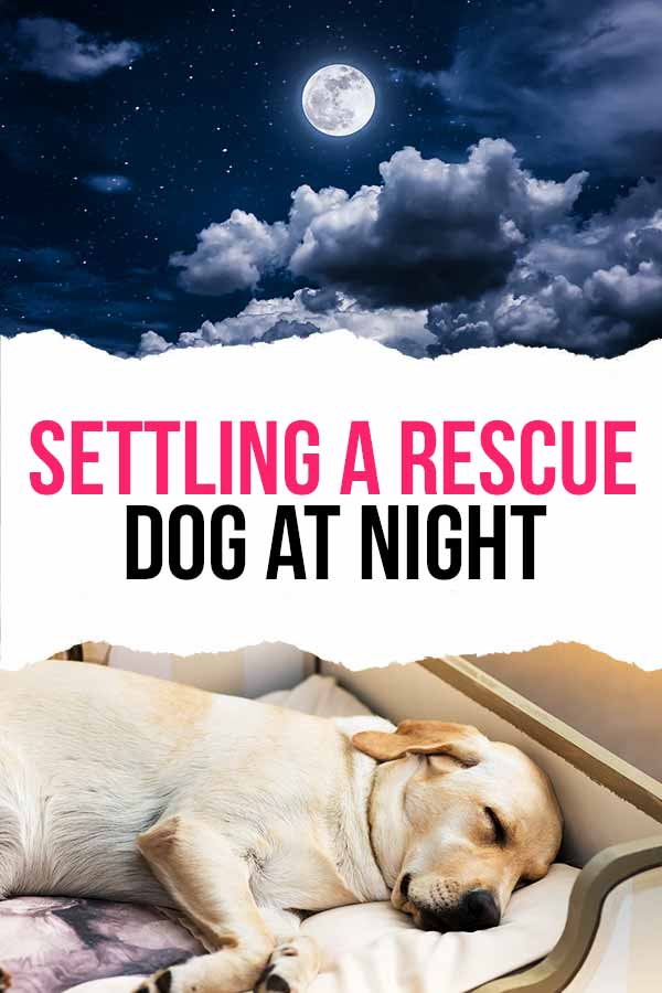 settling a rescue dog at night
