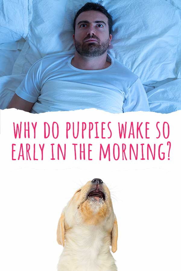 why do puppies wake so early in the morning