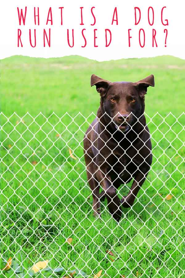 what is a dog run used for