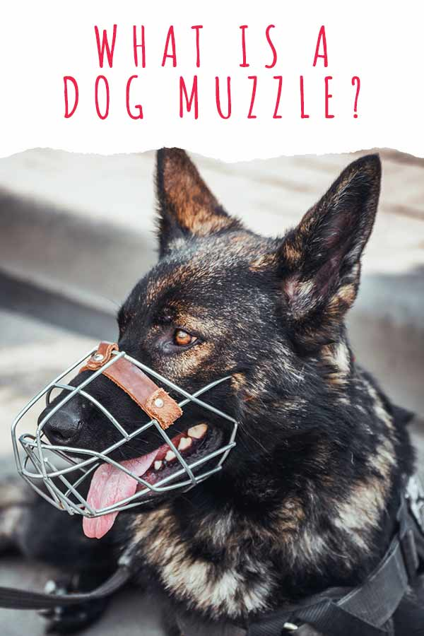 what is a dog muzzle