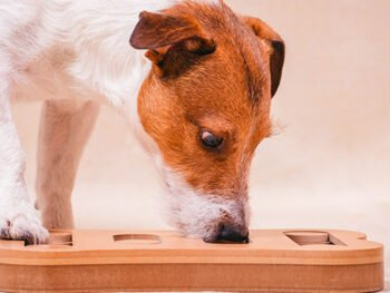 what is a food puzzle for dogs
