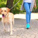 what is the best time to walk a dog