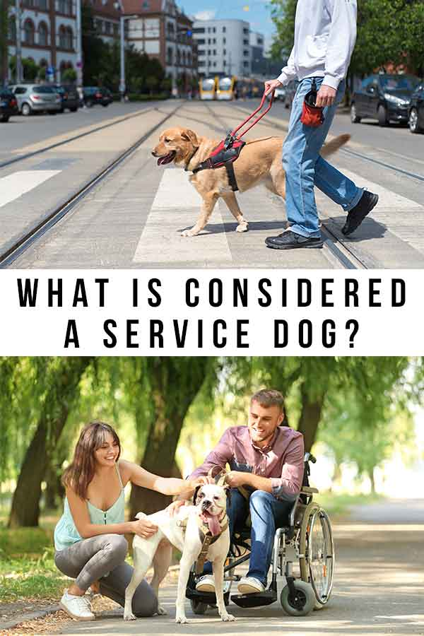 what is considered a service dog