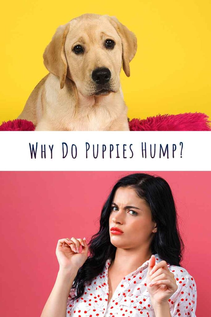 why do puppies hump