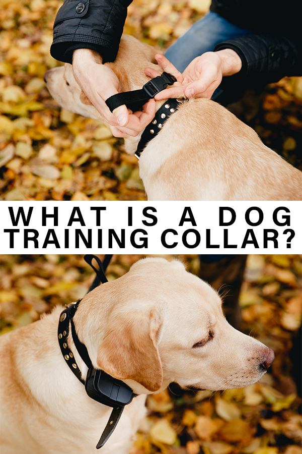 what is a dog training collar