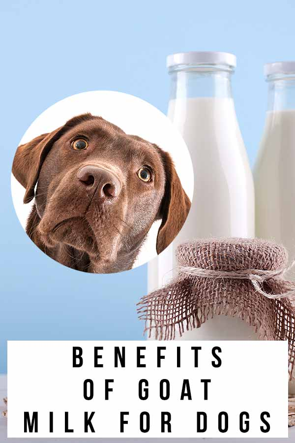benefits of goat milk for dogs