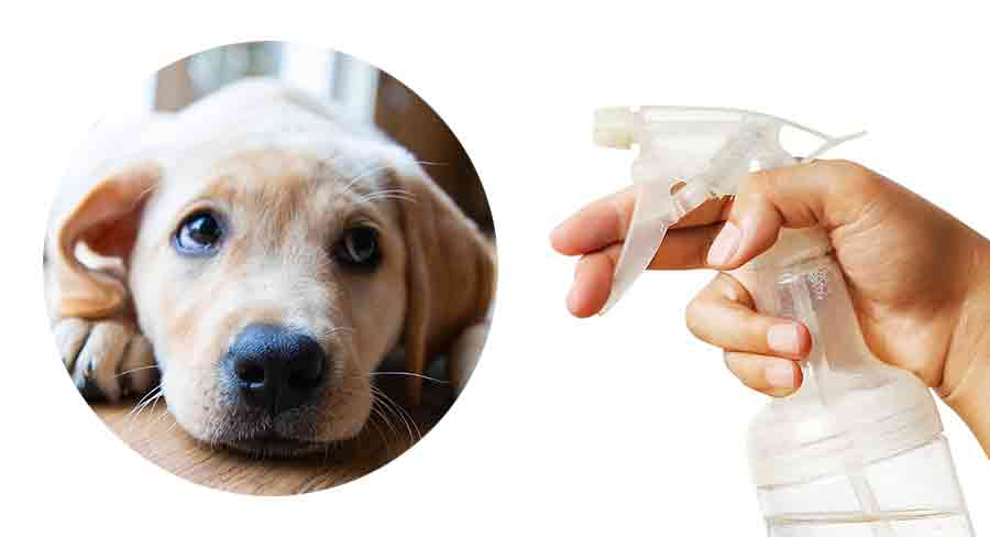 puppy pad training spray
