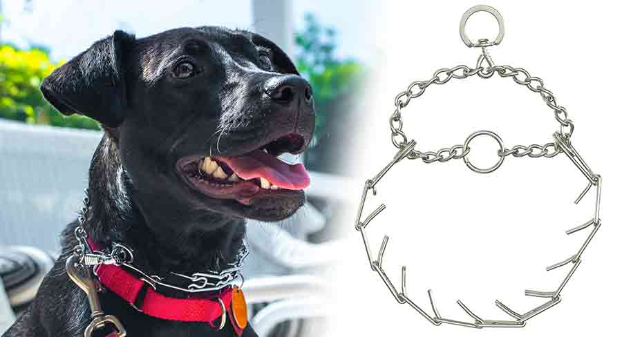 what is a pinch collar for dogs